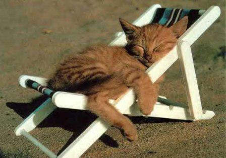 Gato-sol